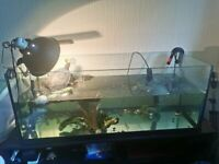 Tank/aquarium 3ftx1.5ftx1.5ft