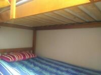 BARGAIN - Solid wood Bunk Bed - REDUCED