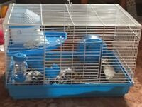 Pet mice for sale with or without cage