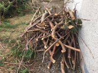 FREE WOOD TREE BRANCHES SUITABLE FOR FIRES STIVES
