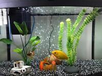 64l Love Fish Panorama Tank
