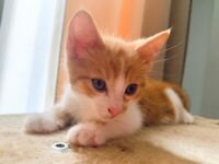 Beautiful kitten boy ready for his forever home.