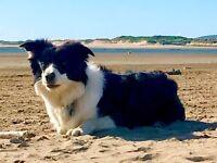DOGS WELCOME - BAR - BEACHES - PUBS - CHEAP AUTUMN BREAKS - POOL - RESTAURANT - ENTERTAINMENT
