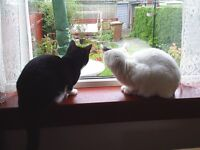 2 mature friendly cats need a new home for free