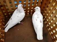 Bird 2 male and 1 female