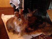 Indoor rabbit cage/hutch wanted