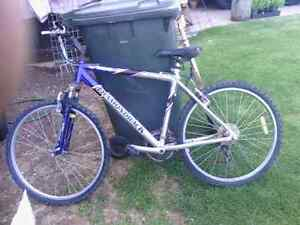 Diamond Back Mountain Bike Salisbury East Salisbury Area Preview
