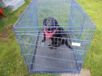 extra large dog cage blue with plastic tray