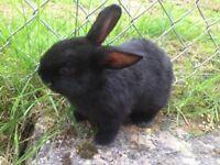 bby rabbits
