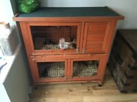 2 X Guinea pigs, complete with hutch, outdoor run and accessories
