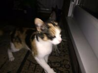 Found cat - Color white, black and brown - Kingstanding