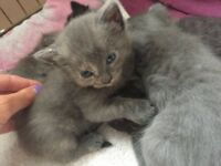 Three kittens left looking for loving homes
