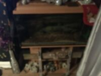 Tropical fish tank and extras
