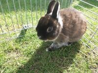 Small bunny looking for forever home
