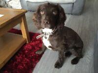 Dog sitter / sharer