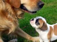 🐕🐶🐩PUPPY CLASSES🐕🐶🐩for young and older puppies