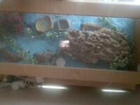 three geckos with complete tank