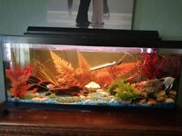 3ft fish tank and accessories