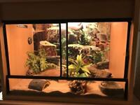 African Fat Tailed Gecko with Tank