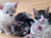 4 gorgeous kittens for sale. 3 girls 1 boy