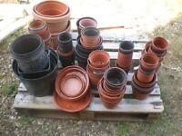 Plant / flower plastic pots x 100`s, all sizes