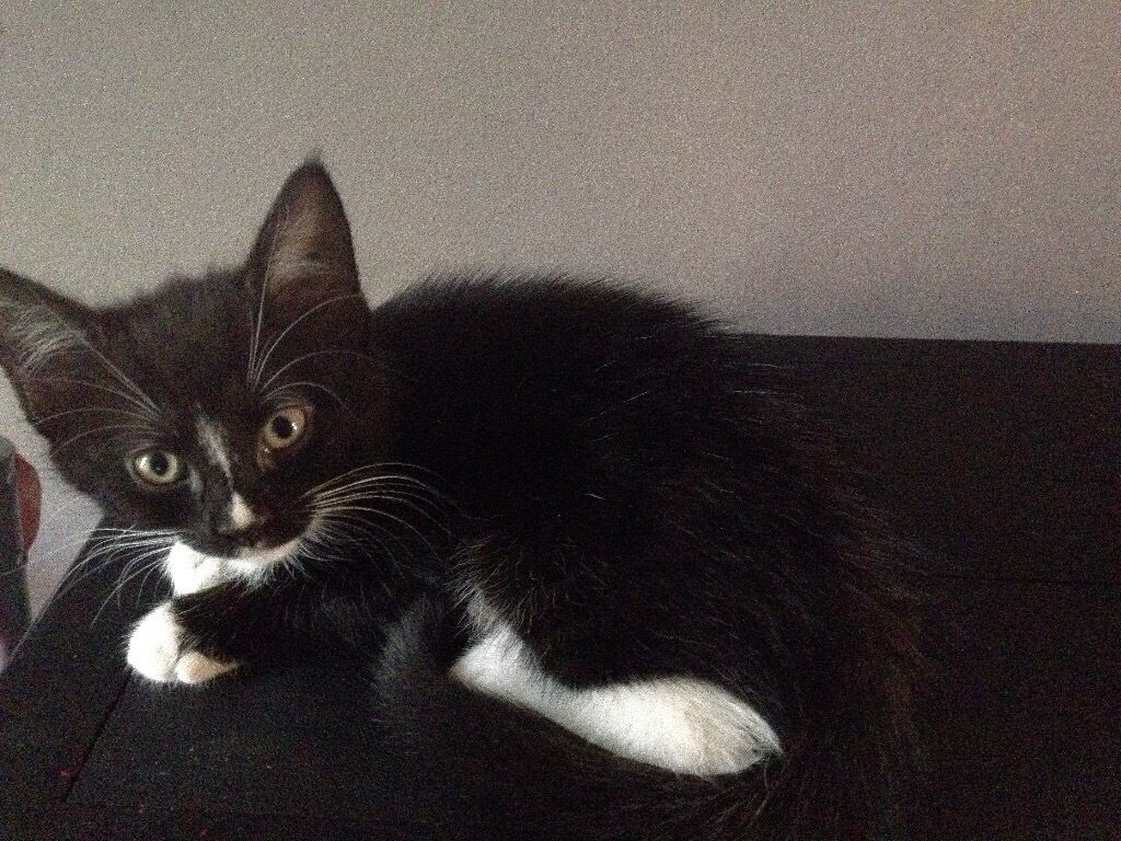 8 Playful Black And White Kittens In Southampton