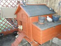 chicken pen and all feeders