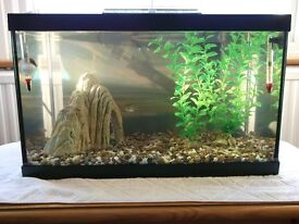 Small Glass Fish Tank with Lid