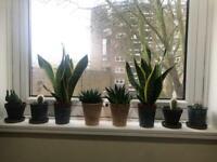 Various indoors plants