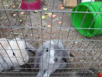 baby rabbits 7 weeks old