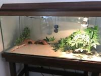 2 Leopards Geckos, Full set up and Accessories