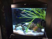 MARINE FISH TANK + FISH + ACCESSORIES