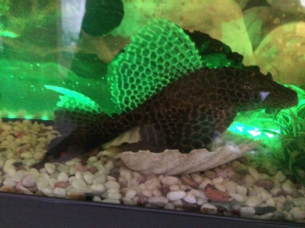 Aquarium fish tank for sale in london - Well Decorated Fish Tank Oscar Fish 14 And Bottom Fish