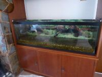 4ft fish tank, equipment & accessories