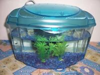 Guppy Fish with a Fish Tank - Guppies