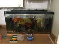 Fish Tank (with 3 fish)