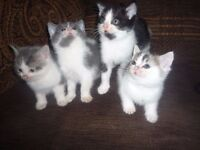 The most adorable kittens ready for wonderful homes
