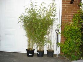plants, trees, shrubs