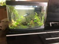 Tropical fish tank 64 litre panoramic