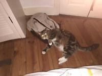 Female cat looking for a new home