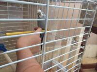 Male budgie and cage for sale