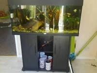 Juwel aquarium fishtank complete