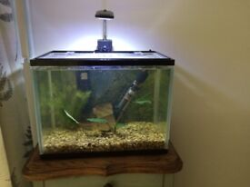 Complete small tropical fish tank with all equipment, mostly new! Great intro for beginners