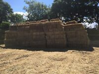 Hay for sale - Good quality Bales, local pick-up needed