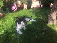 Lovely kitten for sale!