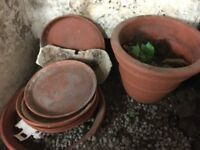 Selection of garden pots and trays