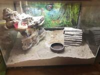 Leopard gecko , tank and accessories