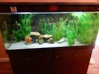 5ft Boyu Aquarium