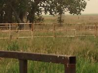 Cattle gates and feeder