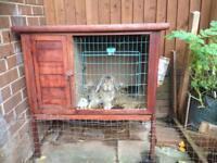 Roger the Rabbit